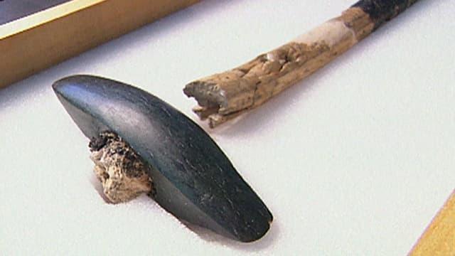 Die Steinzeit-Axt ist in einer Vitrine ausgestellt. Der Stiel ist abgebrocken.