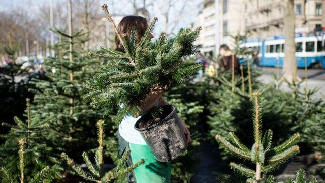 Frau auf Weihnachtsmarkt hebt einen Tannenbaum im Kübel an.