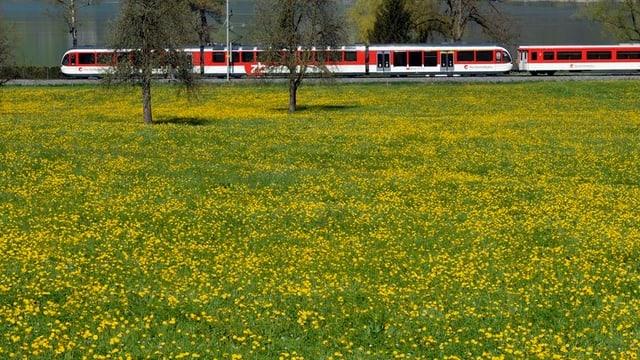 Eine Komposition der Zentralbahn auf der Brünigstrecke.