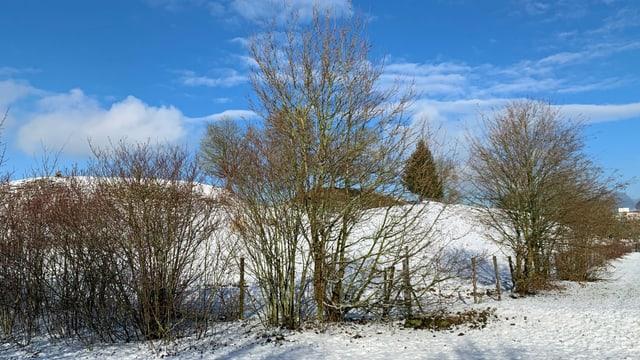 Hügel mit Bäumen im Schnee