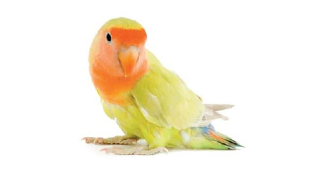 Die Bedürfnisse von Vögeln