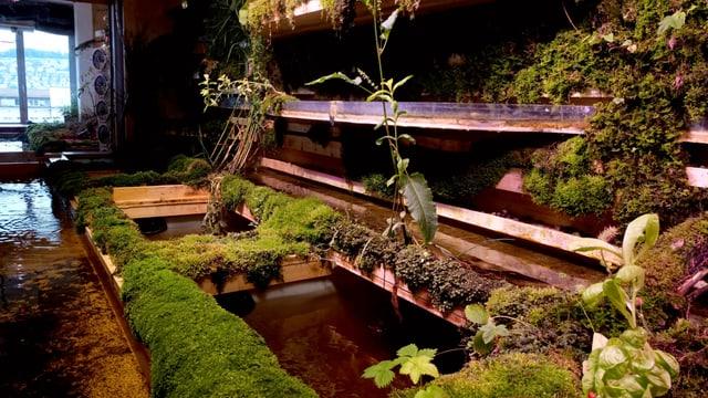 Wasserbecken mit Moos und Pflanzen.