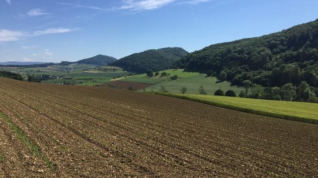 Acker, dahinter Felder und Wälder.