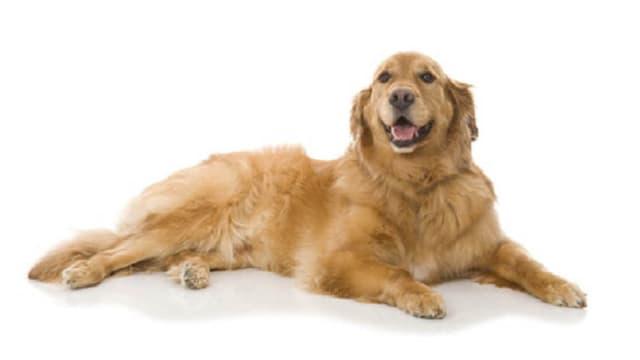 Die Bedürfnisse eines Hundes