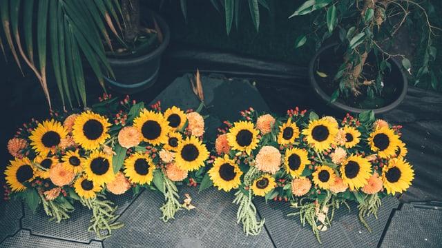 Sonnenblumen.