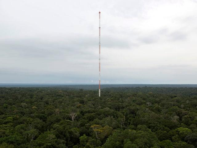 Ein hoher, schmaler Turm inmitten des Dschungels