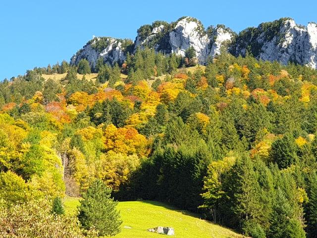 Farbiger Wald