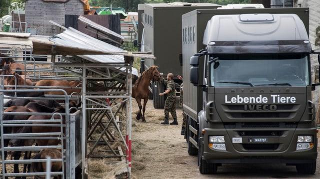 Militär-LKW transportiert Pferde ab