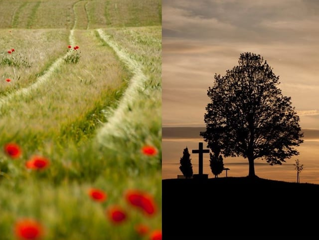 Zwei Bilder: Eine Wiese und ein Baum.