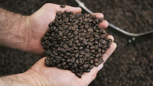Viele Kaffeebohnen in zwei Händen.