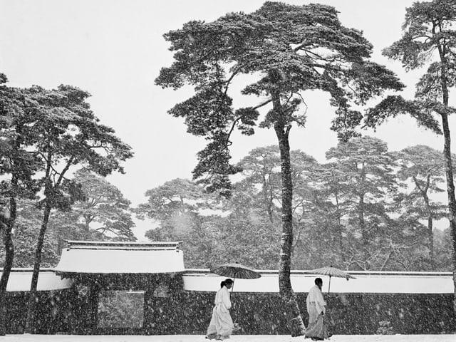 Japanische Möche im Schneetreiben.