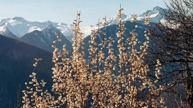Vista en la Val Calanca