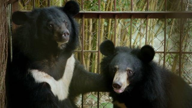 Video «Geheimnisse Asiens – Durch den Dschungel Vietnams» abspielen
