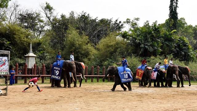 Elefanten am Fussballspielen.