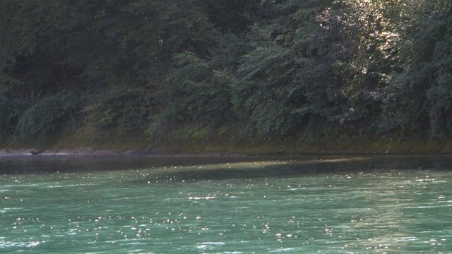 Ein Stück Rheinufer mit Steinplatten.