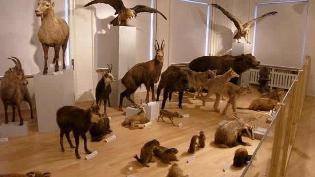 Tiere aus dem Glarner Tierreich.