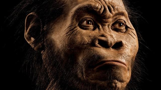 Nachbildung des Gesichtes von Homo naledi