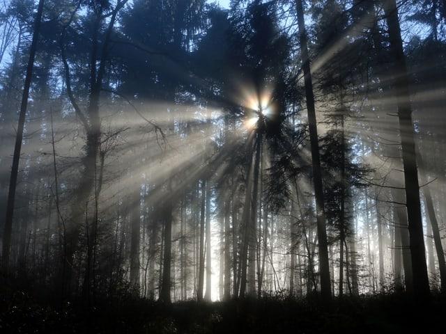 Licht bricht durch den Wald.