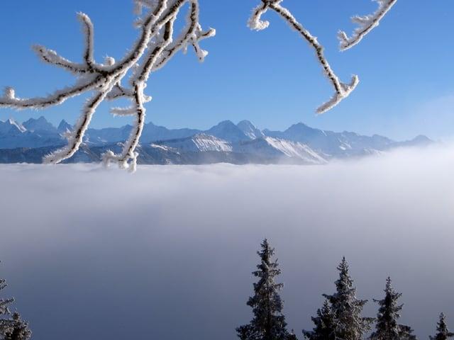 Im Vordergrund Ast mit weissem Reif, hängt von oben ins Bild. Dahinter Nebelmeer und am Horizont Berge.