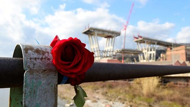 Eine Rose im Vordergrund, zwei Brückenpfeiler im Hintergrund