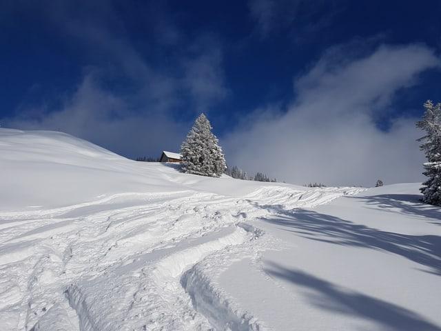Blick auf ein Schneefeld mit Skispuren. Im Hintergrund sieht man eine Hütte und ein paar Tannen. Der Himmel ist blau.