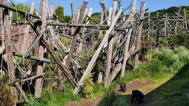 Ein Trail aus Baumstämmen am Rande eines Affengeheges im Edinburgh Zoo.
