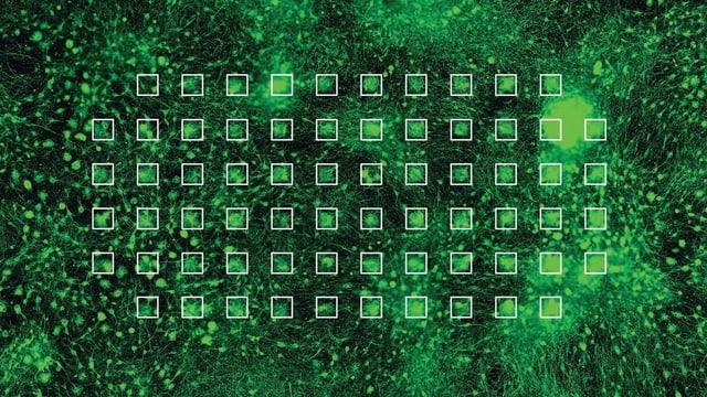 Mikroskopische Ansicht von Nervenzellen, grüne Farbe und ein Raster.