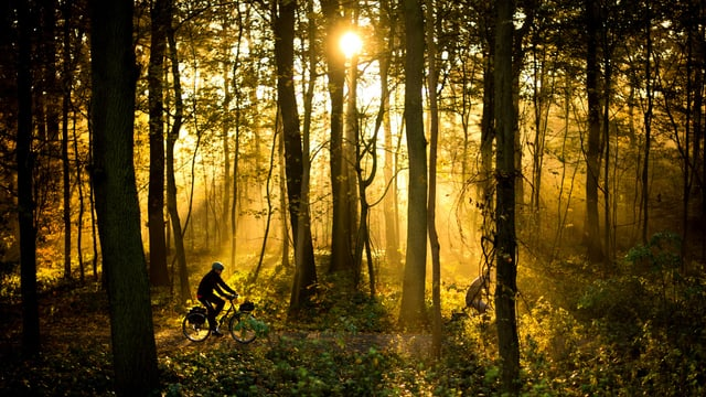 Zwei Männer fahren am mit einem Fahrrad durch den sonnendurchfluteten Stadtwald. (keystone)