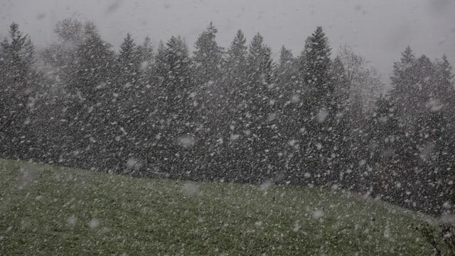 Riesige Schneeflocken gehen auf ein Feld bei Oberhünigen im Bernbiet nieder.