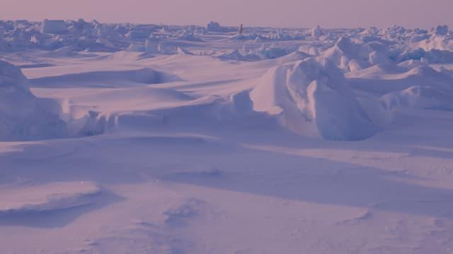 Perfekt getarnt: der Eisbär in der Polarlandschaft.