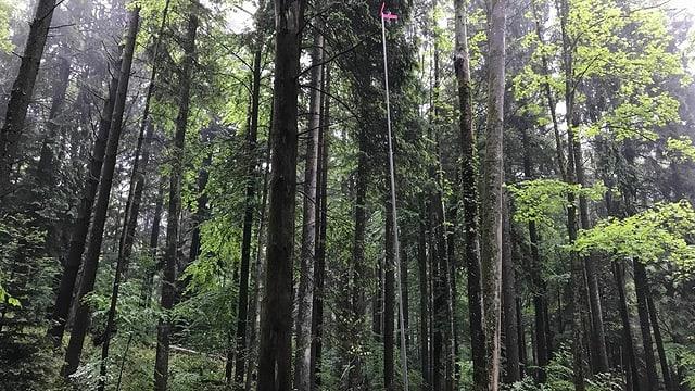 Im Wald steht ein hohes Bauprofil.