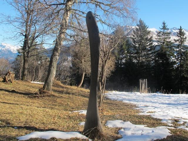 Aus einem alten Stamm wurde ein schlankes Kunstwerk.