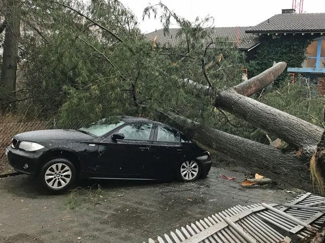 Baumstamm liegt auf dem Heck eines Personenwagens