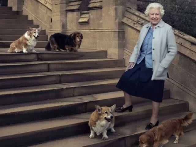 Die Queen steht umgeben von vier Hunden auf einer Treppe und lächelt in die Kamera.