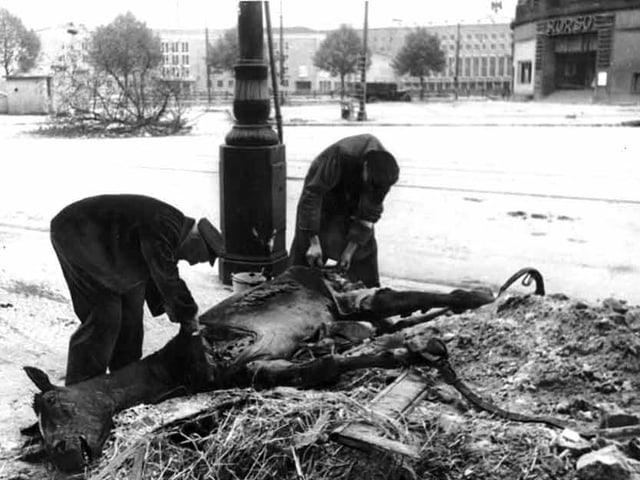 Von einem verendenden Pferd wird auf der Strasse das Fleisch runtergeschnitten.