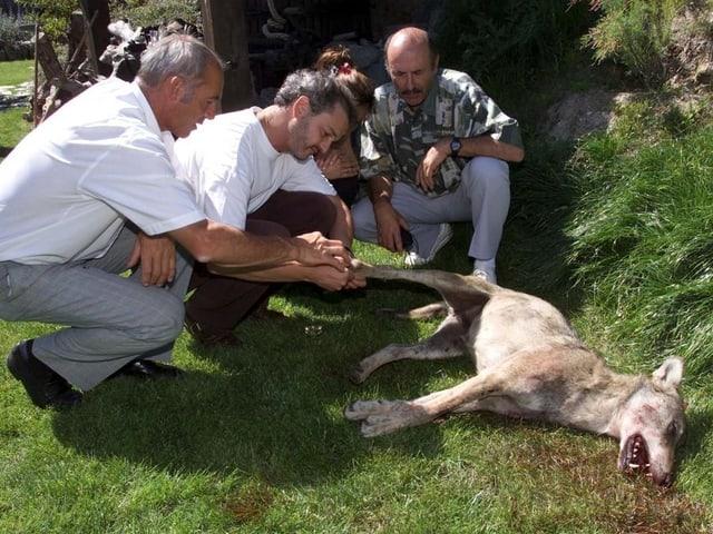 Männer und ein toter Wolf.