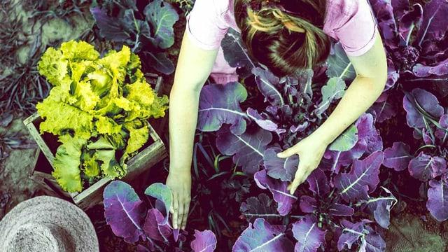 Frau im Garten beugt sich über angepflanztes Gemüse