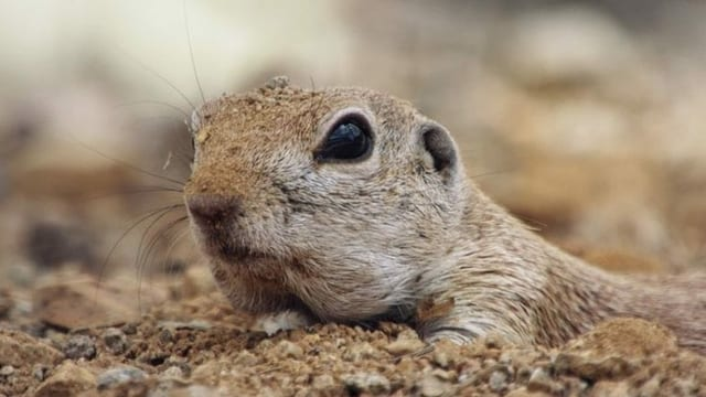 Ein Hörnchen auf sandigem Boden.