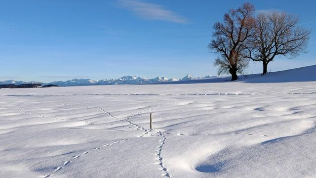 Tierspuren im Schnee mit Bäumen und Bergen im Hintergrund.