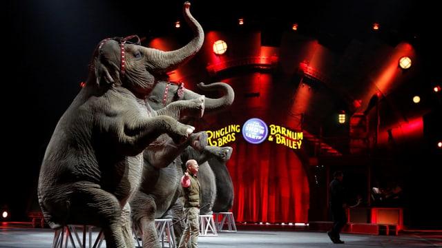 Elefanten in der Manege.
