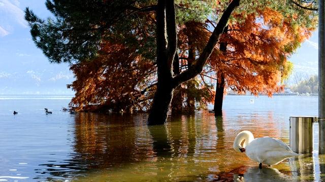Überschwemmte Bäume bei Locarno