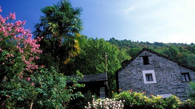 ein Steinhaus umgeben von Büschen und Palmen