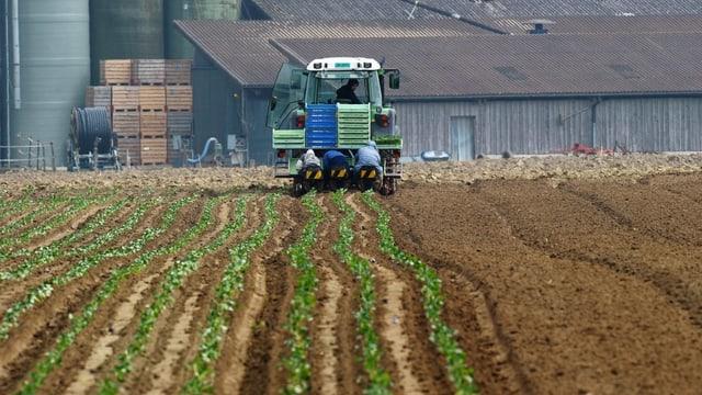 Feld mit Traktor, im Hintergrund Bauernhof