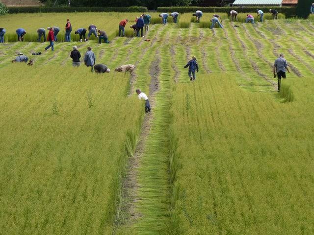 Menschen an der Arbeit auf einem grünen Feld.