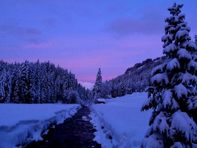 Verschneite Berglandschaft mit Tannen und violettem Himmel