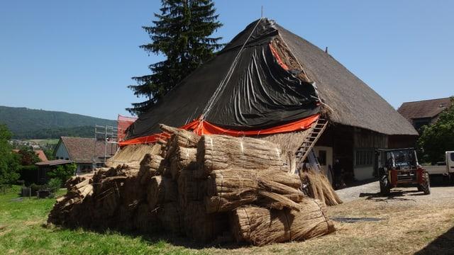 Getrocknete Schilfbündel liegen bereit vor der Westseite des Strohdachhauses in Hüttikon.