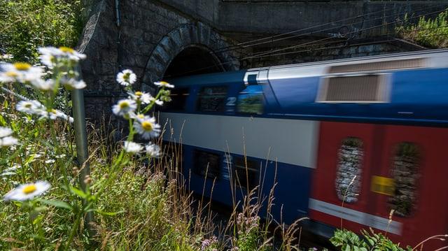Eisenbahnzug fährt durch altmodisches Tunnelportal, im Vordergrund Blumenwiese