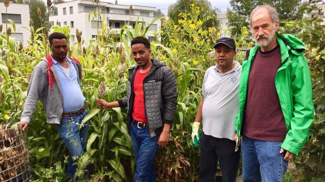 Ueli Troxler (ganz rechts) pflanzt mit Migranten in Arbon afrikanisches Getreide an.