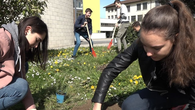 Schulklasse legt Blumenwiese an