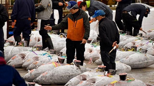 Gefrorene ganze Thunfische am Boden